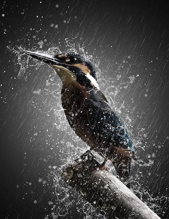 bird-3389053_960_720